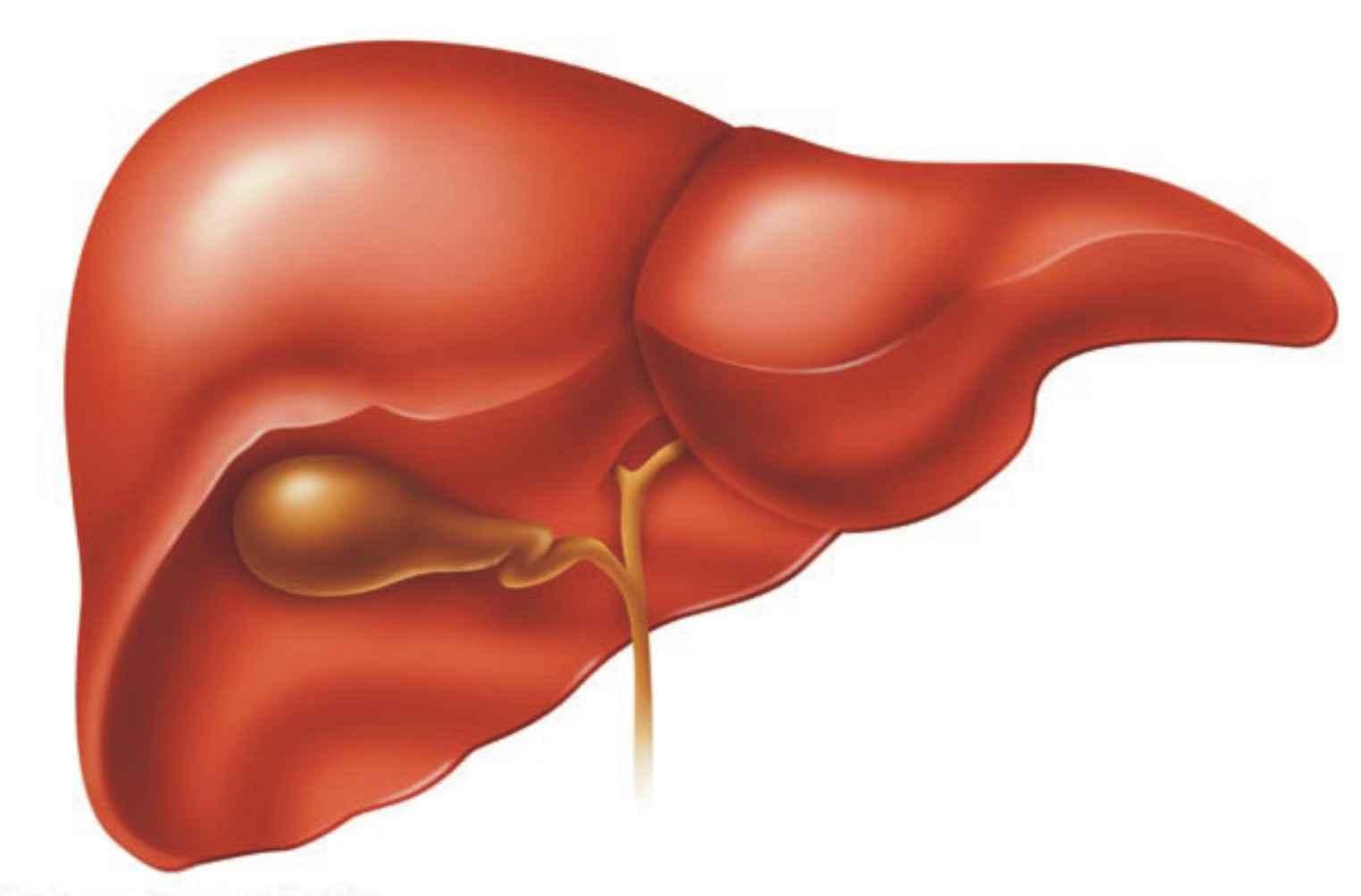 أطباء أتراك يبتكرون تقنية فريدة لزراعة الكبد