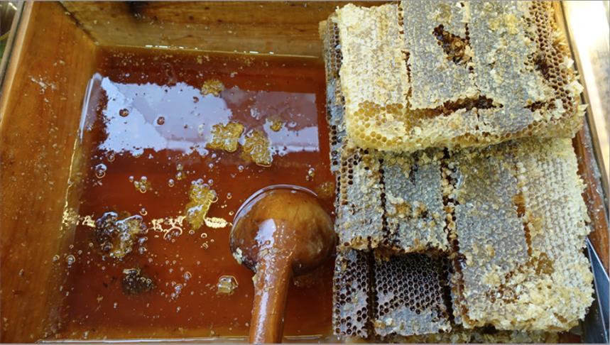 ارتفاع صادرات تركيا من العسل 7 بالمائة العام الماضي