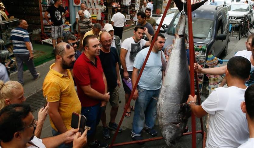 تركي يصيد بصنارته سمكة تونة طولها مترين