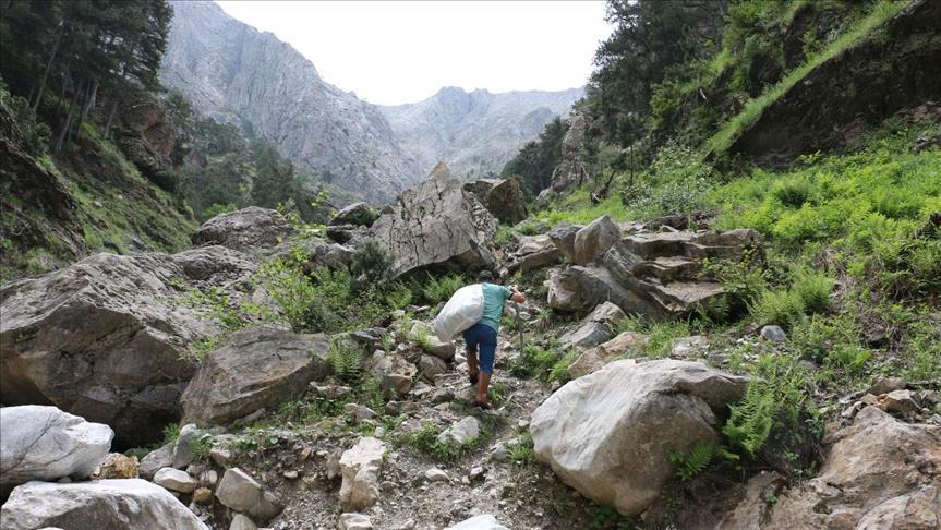 ثلج لم يمسسه بشر.. من قمم الجبال إلى موائد الصائمين في تركيا
