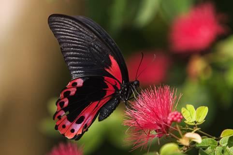 حديقة الفراشات في إسطنبول.. راقصات بألوان زاهية على أنغام الربيع