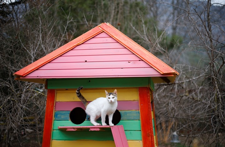 وللقطط قرية..!